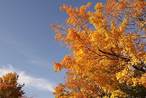 Fall_Colours_Mono_Cliffs_Provincial_Park